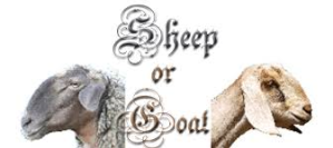 sheep or goat