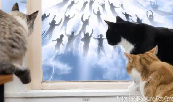 rapture-cats
